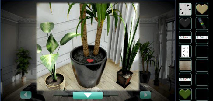 観葉植物を拡大